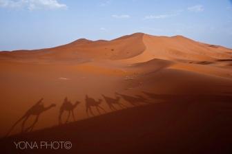 Camels walking through the Sahar, Merzougha, Morocco