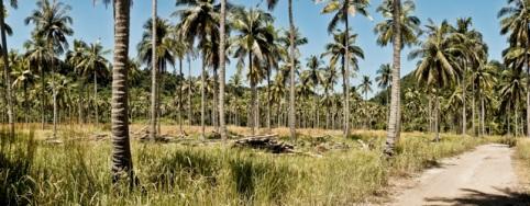 Palm Island, Southern Thailand
