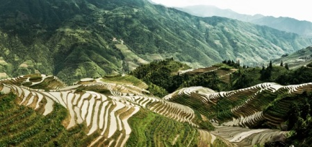 Rice Paddies in Guilin, Guangxi Province, China