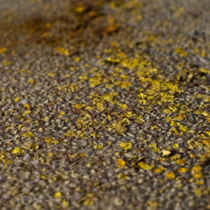 Yellow Paint on Floor