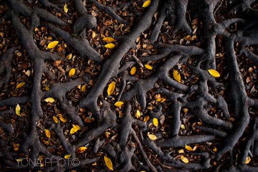 Leaves - Yellow