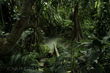 Wild Jungle in Guangdong Province, China