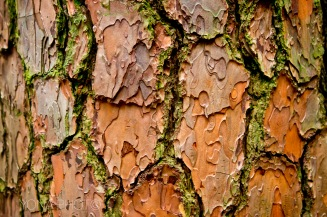 Bright colors on the bark in Danxia Mountain National Park, Shaoguan, Guangdong, China