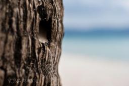 Boracay sand running down a palm trea