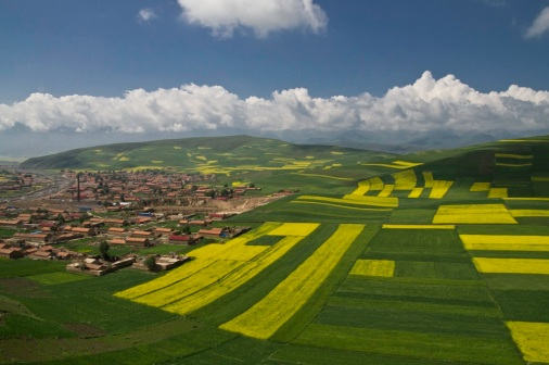 Rapeseed Flowers in MenYuan, Qinghai Province, China