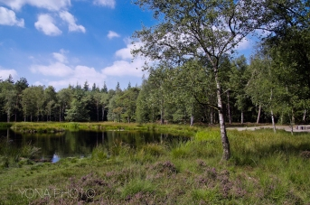 Windswept Heaths in Hattem - in the east of The Netherlands