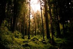 Alishan Forest, in Alishan, Taiwan