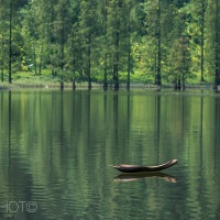 Forest Scenes #3 - The Evergreen Boat in a forest lake
