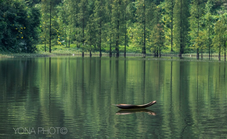 Bamboo boat in forest lake