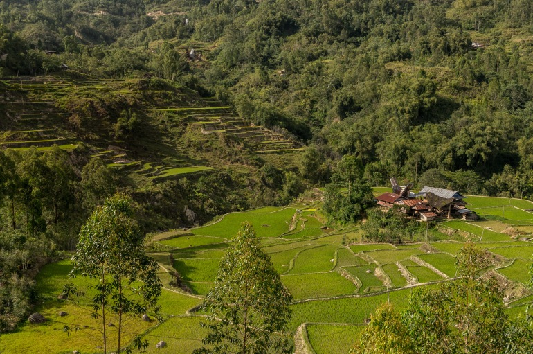 Trekking through the Torajan jungle