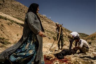 Goat meat - Zagaros Mountains - Iran