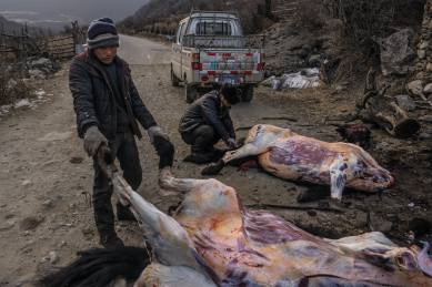 Yak butchers on the hillsides around Kangding, Sichuan Province - China