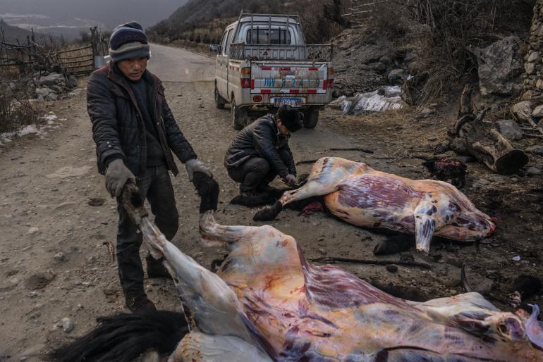 Yak butchers on the hillsides around Kangding, Sichuan Province - China